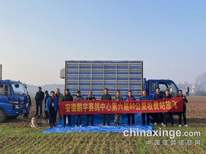安徽鹏宇赛鸽中心80公里收费站训放扫描直播点击进入